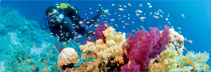 Diving in the Red Sea at Sharm el Sheikh